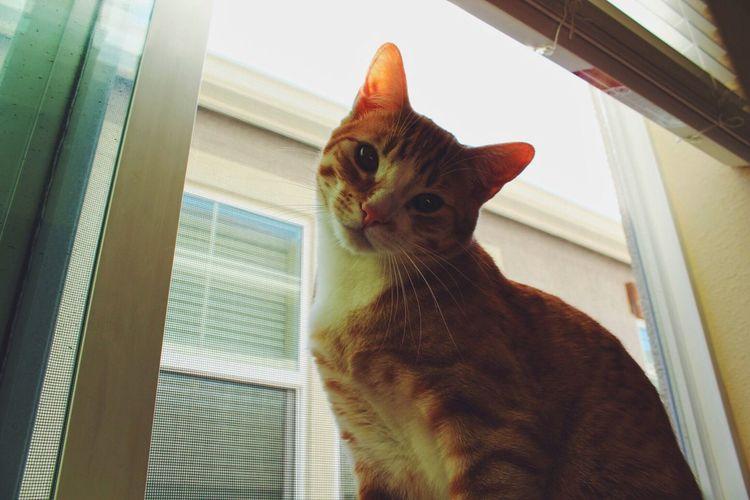 Home Is Where The Art Is Cat EyeEm Best Shots