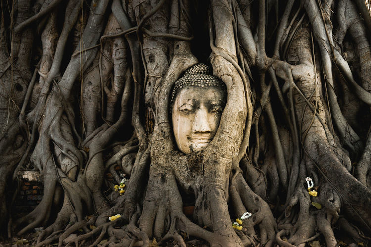 No People Religion Statue Close-up Outdoors Buddha Statue Buddha Temple Travel Holiday Nature Tree Vacations Ayutthaya | Thailand Ayutthaya Ancient Thailand Amazingthailand Watmahathat