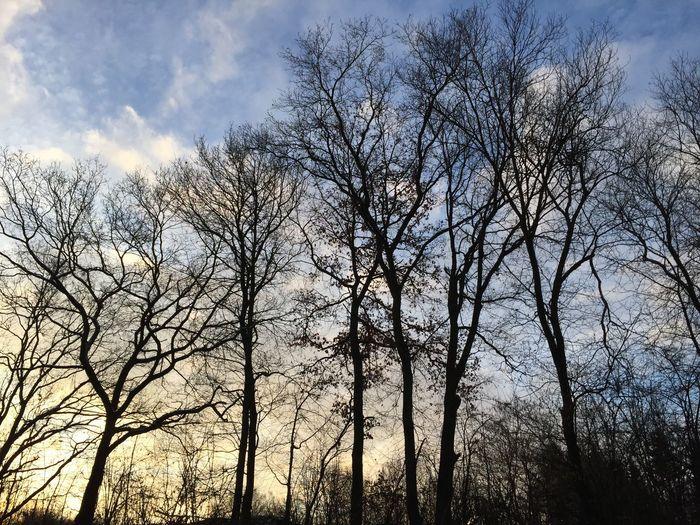 Morgenhimmel Sky