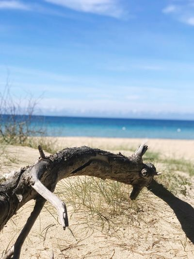 Sea Beach Sea Day Nature Outdoors Sunlight One Animal Water Reptile No People Horizon Over Water Animals In The Wild Sky Sand Beauty In Nature Animal Themes Scenics Iguana Close-up