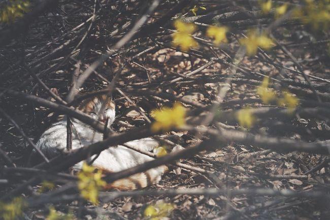 Streetcat Cat Feralcat