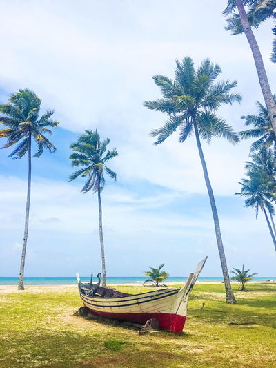 Palm and tropical beach. Beautiful nature landscape with Coconut Palm trees ASIA Beautiful Nature Terengganu, Malaysia Beach Beauty In Nature Cloud - Sky Day Grass Growth Landscape Nature Nautical Vessel No People Outdoors Palm Tree Rope Swing Scenics Sea Sky Tranquil Scene Tranquility Travel Destinations Tree Tree Trunk Water