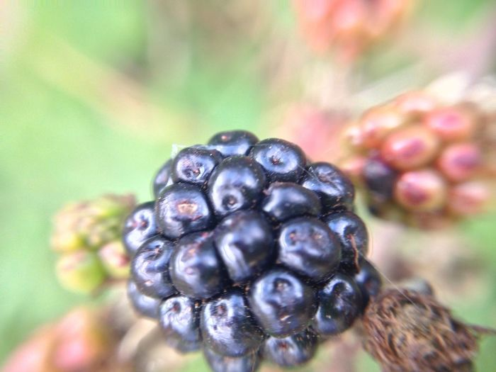 Close-up Blueberry Fruit Berry Fruit