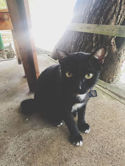Black cat Mammal Animal Themes One Animal Animal Pets Domestic Animals Domestic Sunlight Day Vertebrate Cat No People Nature Feline Black Color Portrait Domestic Cat Looking At Camera Close-up Outdoors