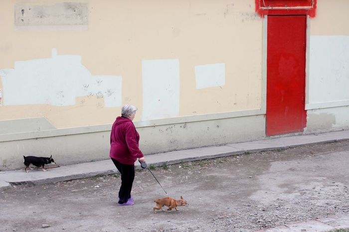 Red Walls Streetphotography Pets Dog Full Length Lap Dog