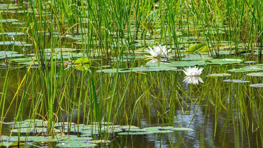 Swamp views