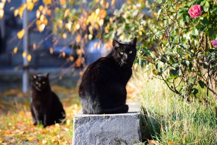 Fritz (and in background Jacky) Change Autumn Collection Domestic Cat Cat Pets Cats Cats Of EyeEm Sitting Sitting Outside Fall Autumn🍁🍁🍁 Autumn Black Cat Animals EyeEm Nature Lover EyeEm Masterclass CDRE Cats Feline Animal Themes Focus On Foreground Whisker