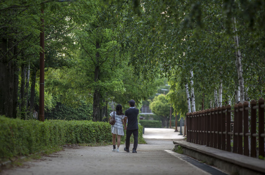 Casual Clothing Day Diminishing Perspective Footpath Full Length Grass Green Color Growth Hand In Hand Leisure Activity Lifestyles Nature Outdoors Pathway Pathways Plant Rear View Seonyudo The Way Forward Tranquility Tree Treelined Vanishing Point Walkway Walkwaywhy