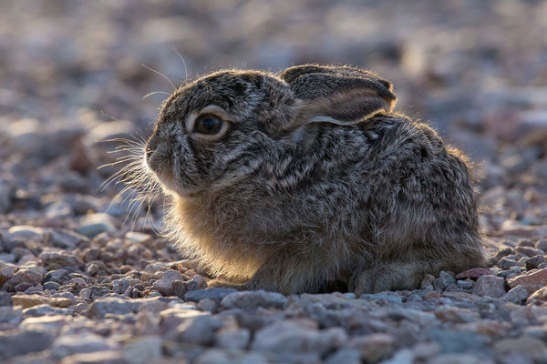 Alertness Animal Head  Animal Themes Bunny  Low Angle View Mammal Nature Outdoors Rabbit Wildlife