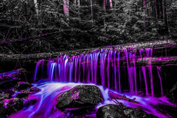 Tree Beauty In Nature Long Exposure Plant Motion Waterfall Scenics - Nature Water Forest Nature No People Land Blurred Motion Flowing Water Rock Rock - Object Environment Non-urban Scene Outdoors Flowing Purple Rainforest Stream - Flowing Water Power In Nature