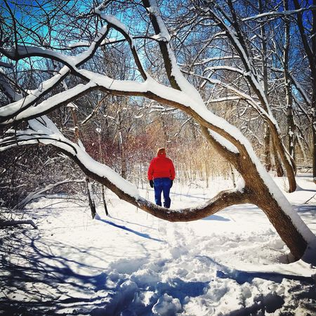 Winter Snow Cold Temperature Tree Bare Tree Full Length Nature Weather Beauty In Nature Outdoors Scenics Branch One Person Frozen Tranquility Day Real People Adventure Adult Warm Clothing