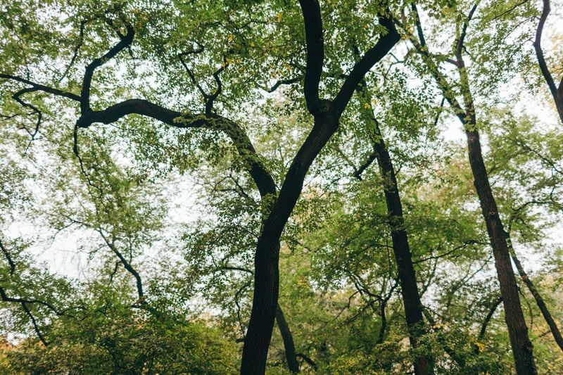 Tree Forest Nature Branch Outdoors Low Angle View Green Color Day No People Leaf Beauty In Nature Tree Trunk Sky