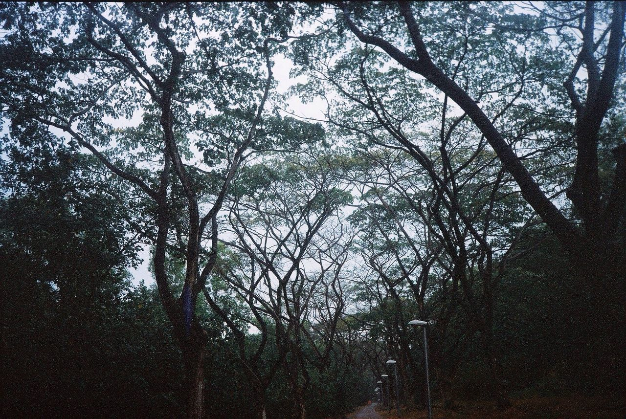 tree, nature, forest, branch, tranquility, beauty in nature, day, no people, landscape, outdoors