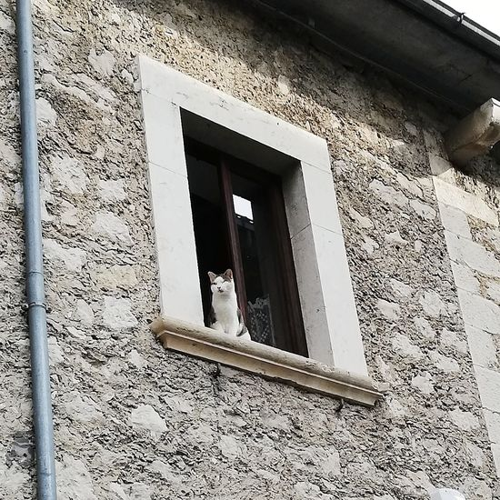 Osservo la vita degli altri,// uno specchio sulla mia vita// che mi sfugge veloce dalle mani,// come un gatto alla finestra// che osserva il fiume di umani incuranti// scorrergli davanti,// nell'attesa e nella speranza// che una rondine poco cauta// si avvicini abbastanza// da poter essere ghermita. Villettabarrea Laquila Abruzzo Italy Cat Gatto Finestra Window Gattoallafinestra Catonthewindow