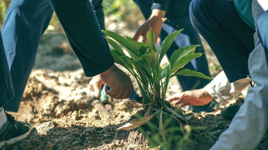 Cropped image of people gardening
