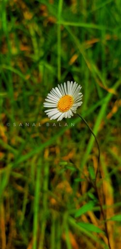 Every flower is