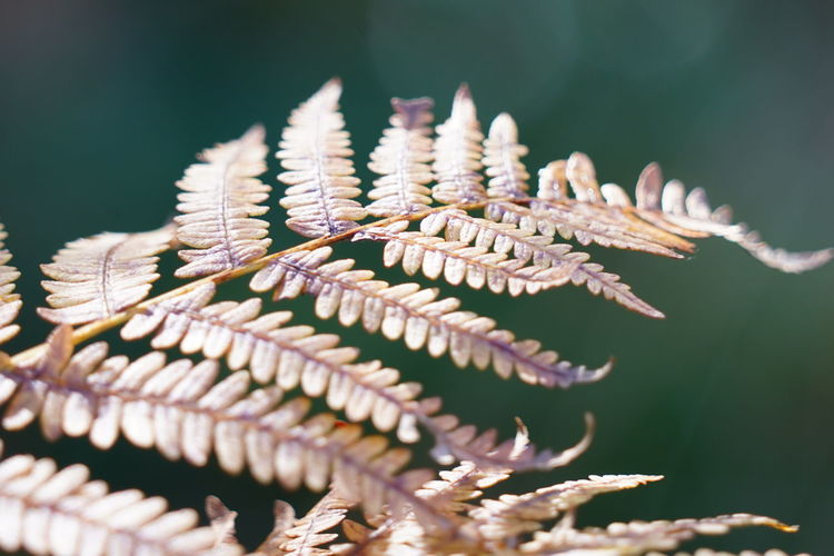 Close-up of fern leaf in autumn mood