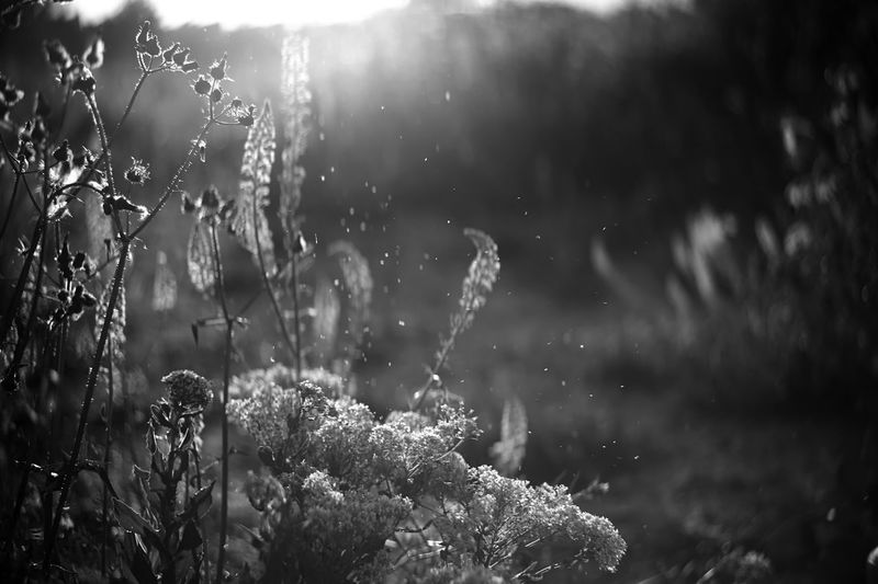Outdoors Nature Plant Beauty In Nature No People Day Close-up Fragility Dof Bokeh First Eyeem Photo EyeEmNewHere Backgrounds Scenics Plant Tranquility Beauty In Nature Full Frame Rural Scene Farm Nature Flower Bokeh Photography Monochrome Blackandwhite