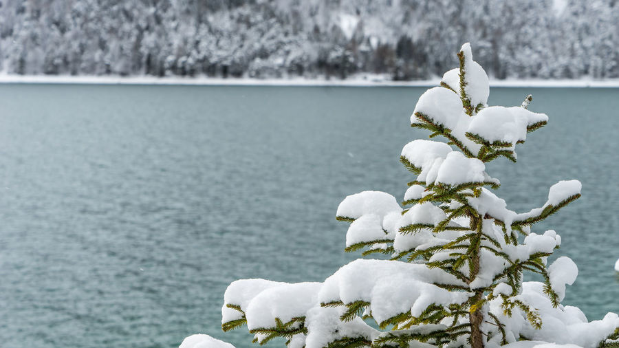 Tree Winter Beauty In Nature Cold Temperature Focus On Foreground Lake Nature No People Outdoors Scenics Snow Tranquility White Color Winter