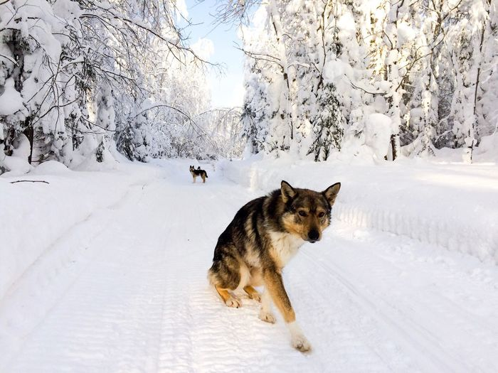 Friends Snow Winter Dog Animal Themes Cold Temperature White Color Nature Day Frozen Snowing Sunlight Weather Winter Nature
