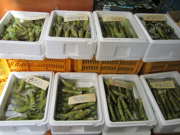 Close-up Food And Drink For Sale Japanese Horseradish Market Price Tag Wasabi