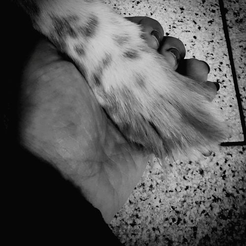 Friends for ever ❤ Mydog♡ Human Body Part Indoors  Day Dogfeet Missing You Forever Friendsforever Pets Kindoflove Black & White Pet Portraits Mydog Missmydog