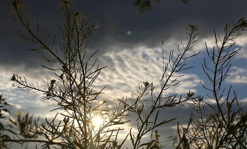 EG Egfotografia Sky Skyphotography Skyphotos Skyphoto Növény Nature Naturelovers Naturephotos Naturephotography Naturephotographer Természetfotók Természetfoto Természet Magyarfoto Magyarfotósok Magyar Instahun Instahungary Naplemente Sunrise_sunsets_aroundworld Sunset Sunlight Clouds cloudphotography felhő felhők nofilter nofilterneeded