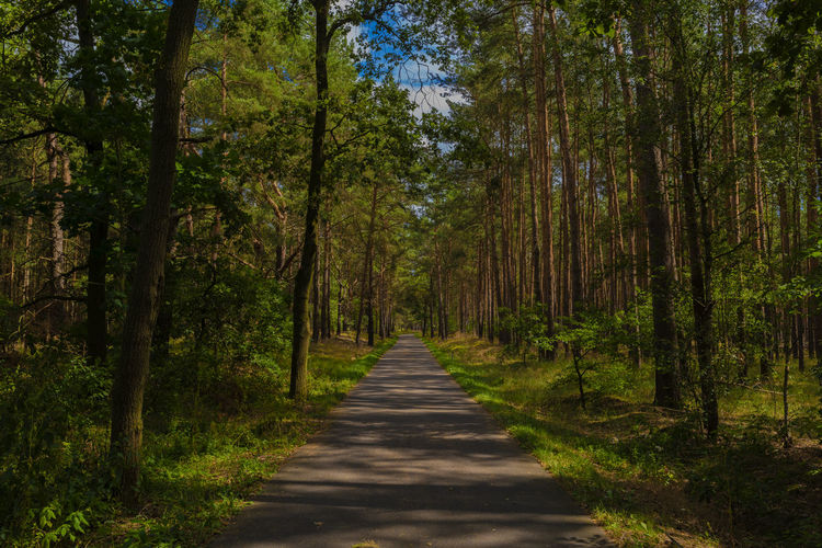 Cycle path in a pine forest in summer in germany