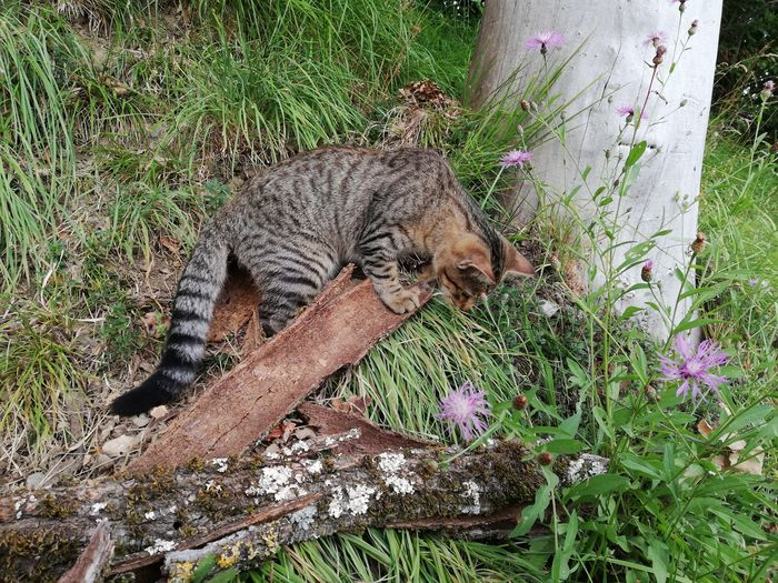 Cat relaxing on grassy field