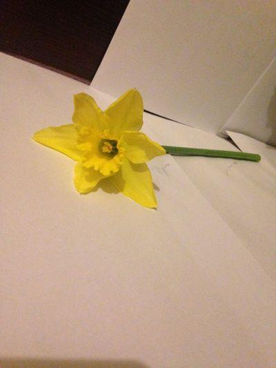 Flower Flowers Yellow Yellow Flower Daffodils Yellow Daffodils