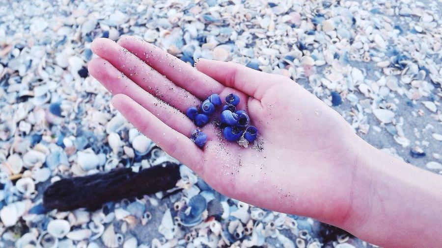 Blueberry shells