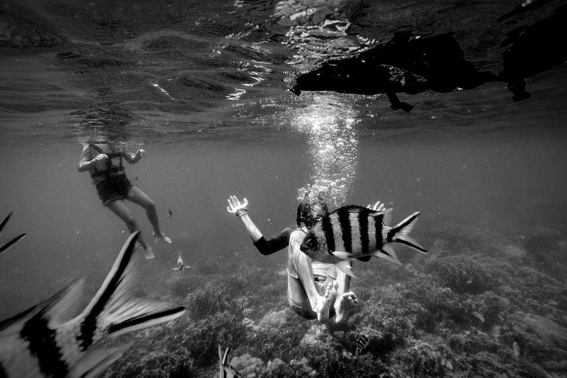 The Traveler - 2015 EyeEm Awards Underwater Diving among Fish Blackandwhite Travel Adventure Eye4photography
