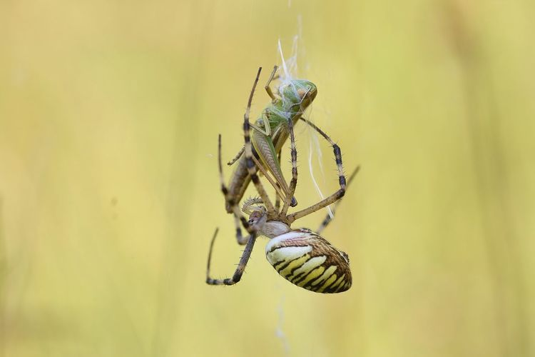 Close-Up Of Spiders Against Blurred Background
