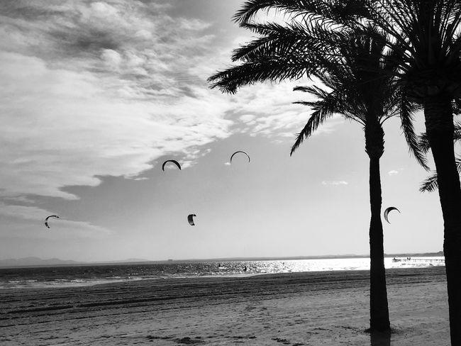 Sport Kitesurfing Kiteboarding Kite Kites Outdoor Activity Outdoorlife Beach Beachphotography Palmtrees Activity Activities. Fitness Healthy Lifestyle