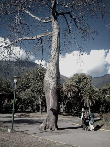 Caracas ParqueNacional