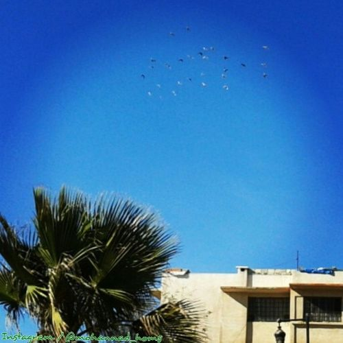 يا طيور بالعالي .. حِنوا على حالي ! .. هنا_حمص سماء الحرية :)