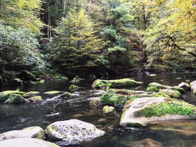 wild nature Forest Germany Nature Flowing Water Beauty In Nature River Idyllic Landscape Wanderlust Traveling Enjoying Life