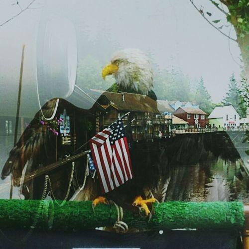 Fourthofjuly 4thofjuly Americanbaldeagle Baldeagle Doubleexposure Patriotism Patriotic Redwhiteblue Waterreflection Americanflag