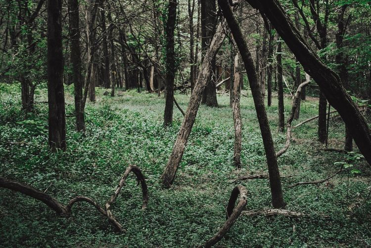 Forest Garden Tree Nature Forest Growth Beauty In Nature Green Color No People Branch Day Scenics Tranquility Outdoors Tree Trunk Landscape Grass