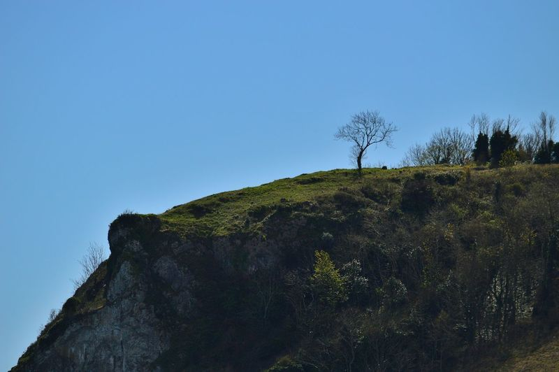 Tree TreePorn Lone Tree Cliff Clifftop Eye4photography  Landscape Landscape_Collection Landscape_photography Green Taking Photos EyeEm Best Shots Devon