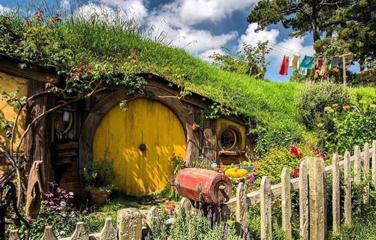 Hobbit houses 👌🏻 an another must do in New Zealand! Abandoned Yellow Obsolete Damaged Deterioration Outdoors Day Flower Vibrant Color Arch Creativity Formal Garden Fragility