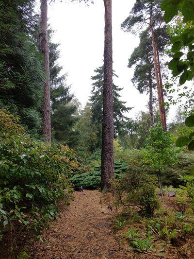 Tree Sky Grass Plant Tree Trunk Woods
