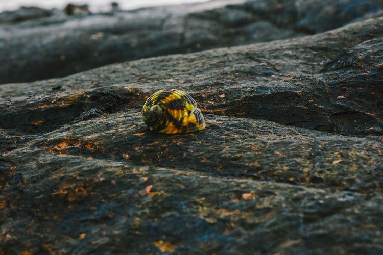 Close-up of caterpillar on rock