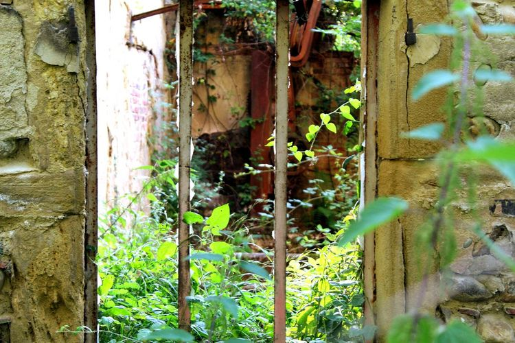 Photography Canon EOS 1855mm Lyon France Picoftheday Instapic Instagood Wood Leaf Tree Nature Old Garden Outdoors Wooden Flora Wall Fall Window Color Abandoned