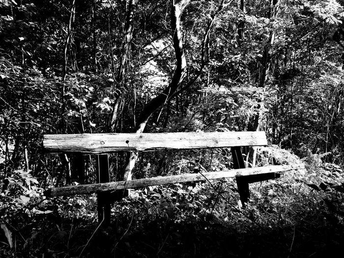 Natura Panchina Bianco E Nero Borgo San Pietro Lago Del Salto Legno Panchinavuota Solitudine