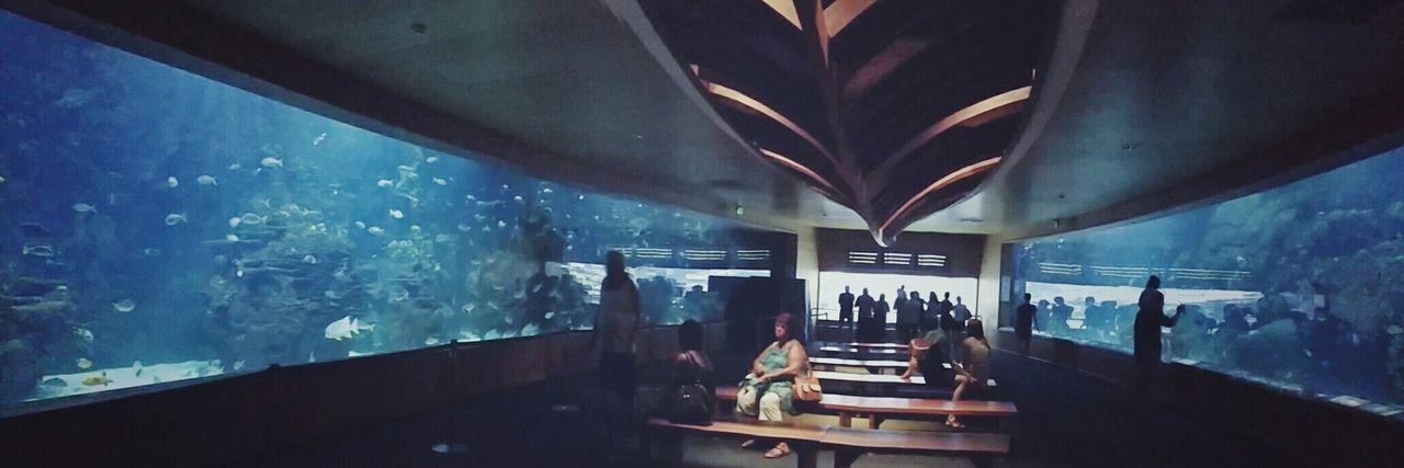 Biggest Aquarium in Europe🐠🐡 Oceanographic Valencia, Spain Panoramic View