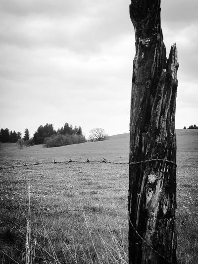 Beauty In Nature Day Dead Tree Field Grass Growth Landscape Nature No People Outdoors Scenics Sky Tranquil Scene Tranquility Tree Tree Trunk