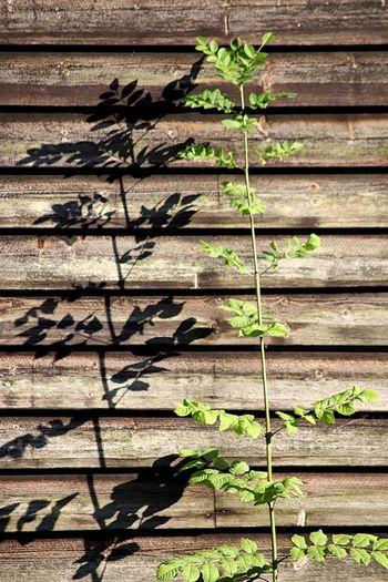 Plant Leaf No