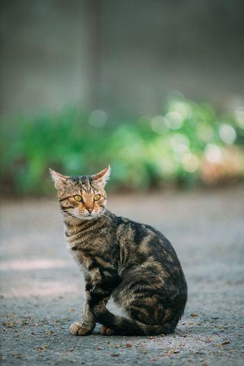 Portrait of cat sitting on city