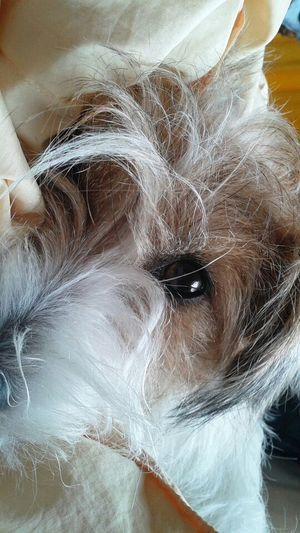 Dog Photo Jrt